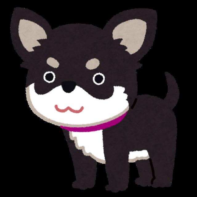 dog_chihuahua_black_tan.png